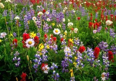 champ fleuri